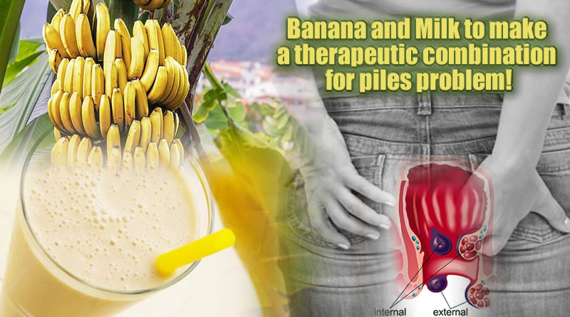 Banana and Milk to make a therapeutic combination for piles problem!