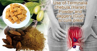 Use of Terminalia chebula (Harad) Powder and Jaggery (Gud) to cure piles!