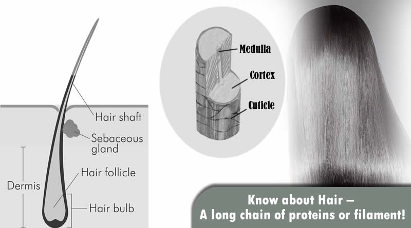 Know about Hair, its problems and treatments