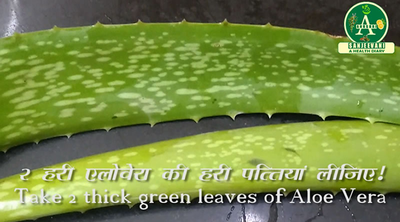 Take two leaves of Aloe Vera for hair loss treatment!
