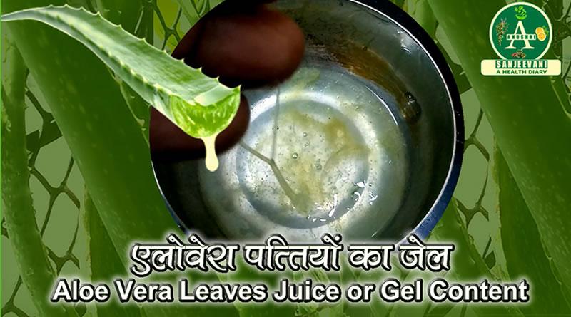 Use of Aloe Vera for hair loss treatment!