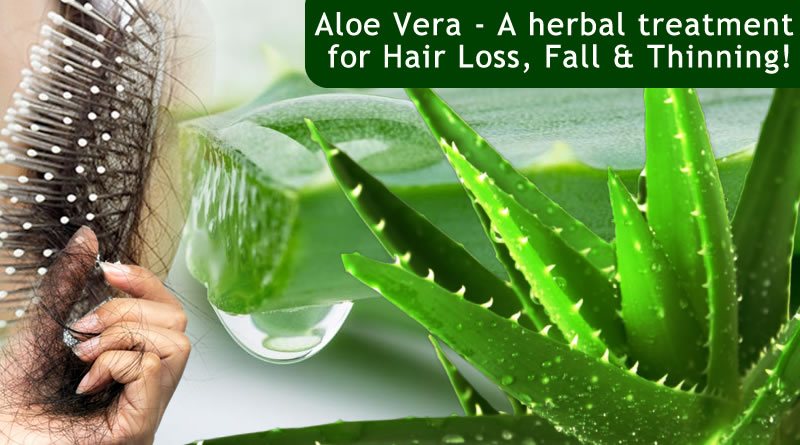 Use of Aloe Vera for hair loss treatment!