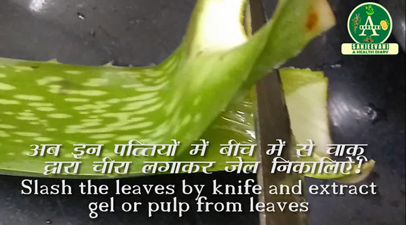 Extract gel or pulp of Aloe Vera for hair loss treatment!