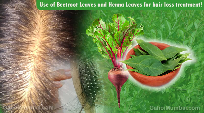 Information about Use of Use of Henna Leaves and Beetroot Leaves for hair loss treatment!