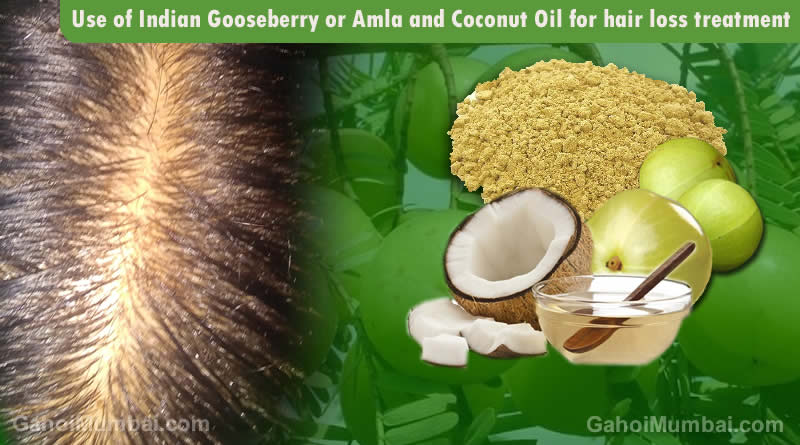 Use Of Indian Gooseberry Or Amla And Coconut Oil For Hair Loss