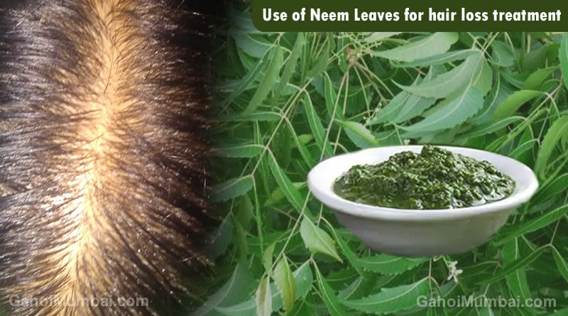 Information about Use of Neem Leaves for hair loss treatment!