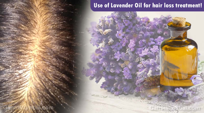 Information about Use of Lavender Oil for hair loss treatment!